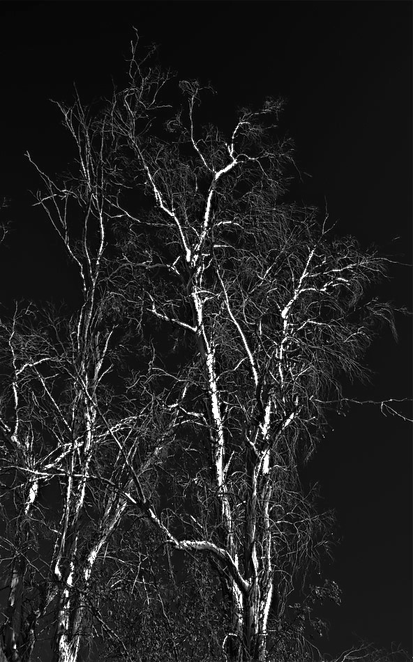 colonnade tree 2..-120080601.jpg