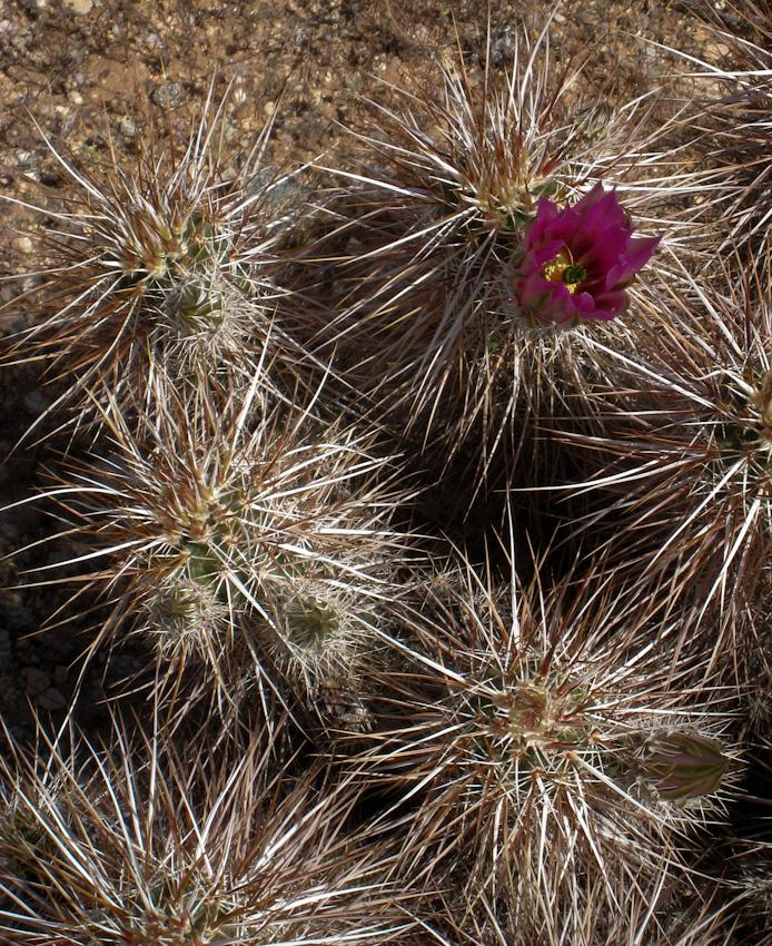 Flower-120090323
