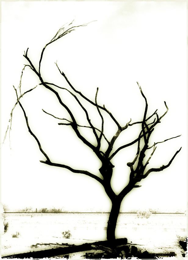 Burnt tree-120080710