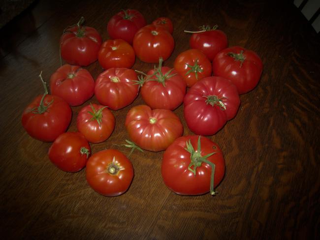 Tomatoes-120100220