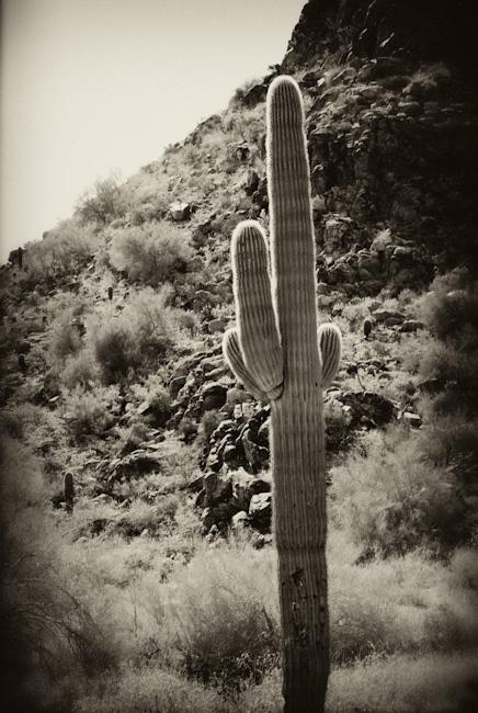 Antique cactus
